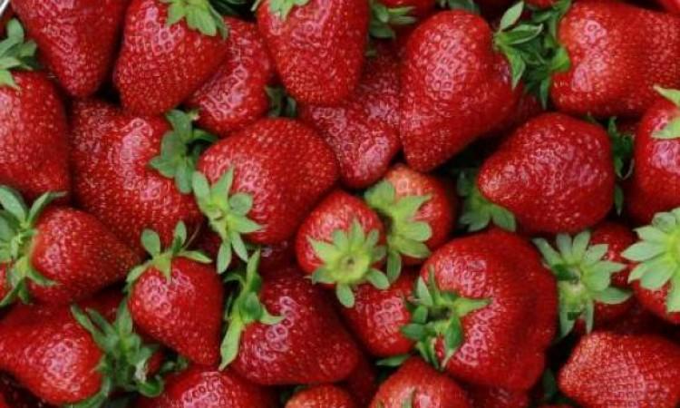 Produtores de morango do país celebram safra, inovações e história
