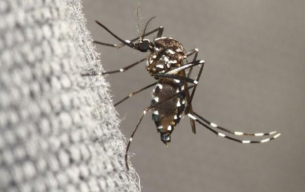dengue-220216.jpg