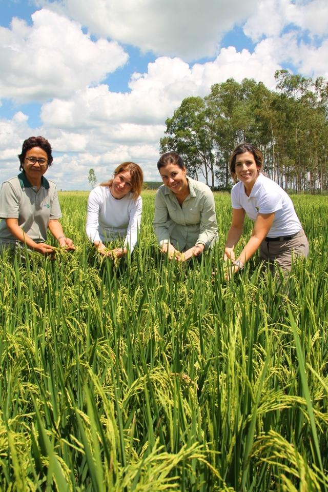Melhoramento-do-arroz.jpeg
