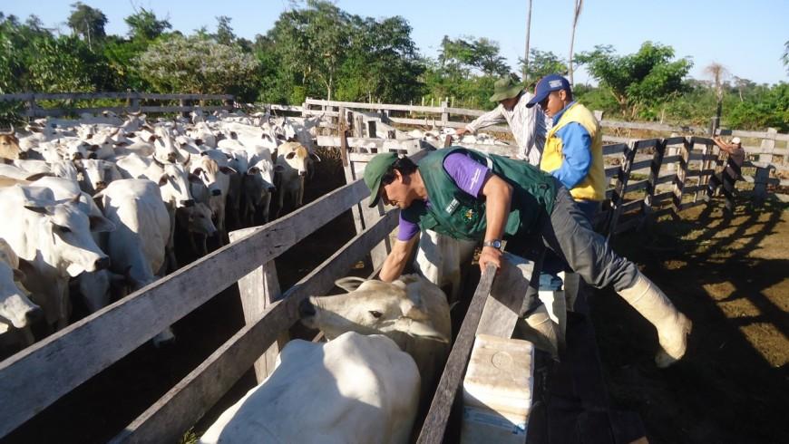 Vacinação-na-Bolívia-29-Ciclo-1-870x490.jpg