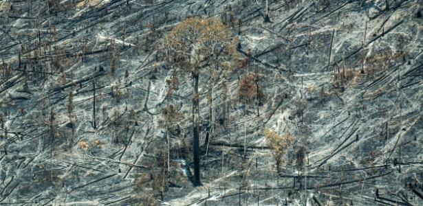 floresta-fica-destruida-apos-fogo-1472597789166_615x300.jpg