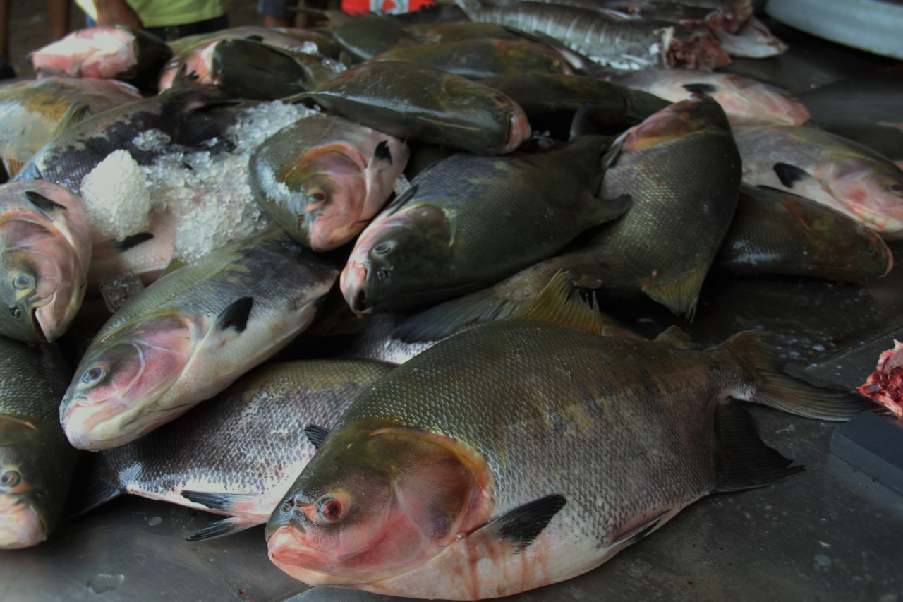Mercado-do-Peixes-Região-do-Cai-Nágua-3.jpg