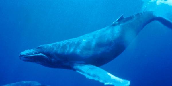 baleia-azul.jpg