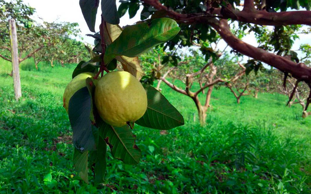 Familia-rural-realiza-sonho-da-agroindustria_004-Foto-EMATER-RO.jpg