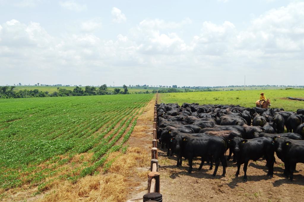 Visita-Fazenda-Corumbiara-Expresso-Barretos-Chupinguaia-Foto-Dhiony-Costa-e-Silva-166.jpg